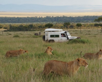 On Safari in the Masai Mara, Kenya- Park vs. Conservancy